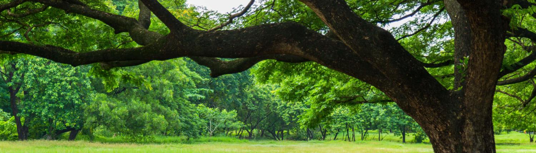 Foundations Oak Tree Encore Partners
